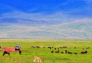 321012 Days Tour to Kenya & Tanzania Budget Safari ( Camping & Lodging)