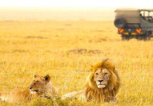 268212-Day Best of Tanzanian Wildlife & Kilimanjaro Trekking Safari (Camping) – 12 Days