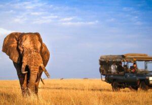 317813 Days Wonderful Uganda Luxury safari Tour (Lodging)