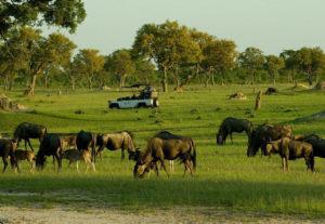 314413 Day Best Highlight Zimbabwe Safari SS (Camping)