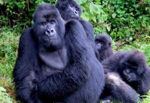 326715 Day Big 5, Gorilla Trekking & Nature Safari ( Lodging)