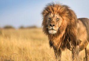 323016 Days Tour To Best of Kenya, Tanzania & Uganda Luxury Safari Tour (Lodging)