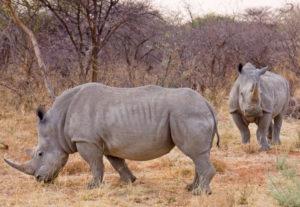 310417 Days Kenya's Wildlife Photography & Birdwatching Safari ( Lodging)
