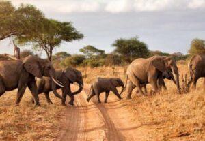 26924 Day Tanzania Safari Big Five Safari (Lodging) – 4 Days