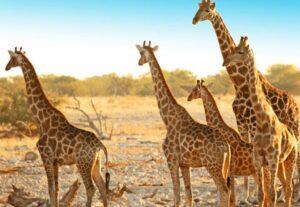 262912 DAYS DISCOVER NAMIBIA SAFARI (Camping) – 12 Days