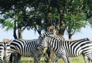 26786-Day Wildebeest Migration Safari (Camping) – 6 Days