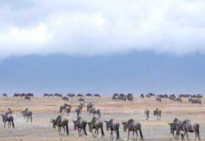 26906 Days Best Wildlife Experience in Tanzania (Lodging) – 6 Days