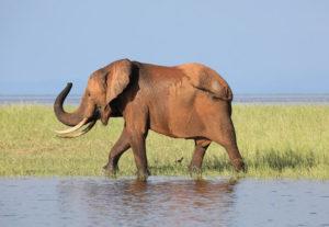 31506-Day Wildlife Zimbabwe Safari SS (Lodging)