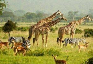 31667-Day Kidgum, Kidepo NP & Murchison Falls Safari