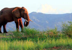 31568 Day Self-Drive Zimbabwe Mana Pools & Chitake Springs Safari ( Camping)