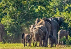 32659-Day Murchison Falls Big 5, Gorilla & Chimp Safari (Lodging)