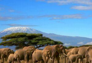 31103-Day Amboseli National Park Safari (Luxury Lodging)