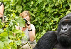31723-Day Luxury Gorilla Trekking Safari (Lodging)