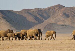 265514 DAYS ULTIMATE NAMIBIAN SAFARI – 14 Days