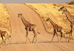 265715 DAYS NAMIBIAN HIGHLIGHTS SAFARI – 15 Days