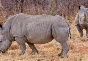 25977 DAYS NORTHERN NAMIBIA SAFARI- ACCOMMODATED- SELF DRIVE – 7 Days