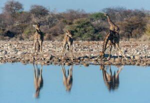 321814 Days Tour to Great Safari in Namibia, Botswana & Victoria Falls Tour (Camping)