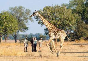 31948-Day Luangwa NP & Lower Zambezi Safari ( Lodging)